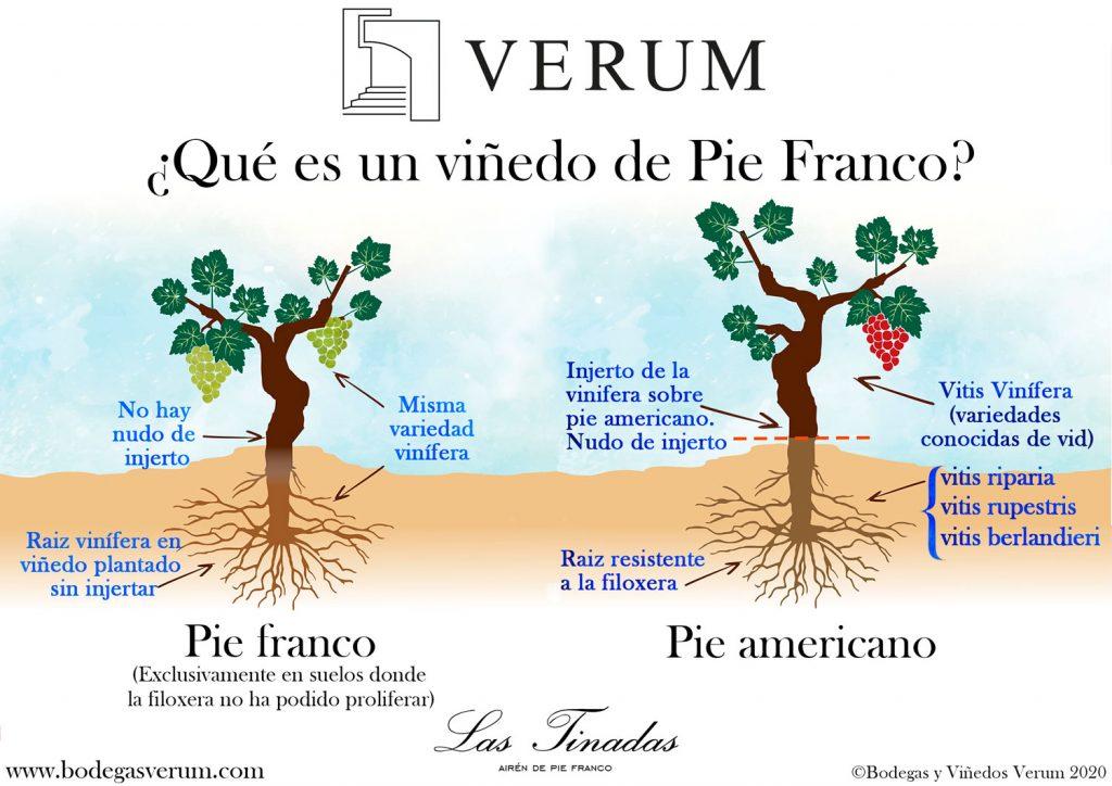 infografia-ilustrada-pie-franco-2020-br